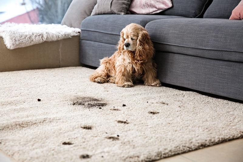 limpiar la alfombra de tu vivienda u oficina